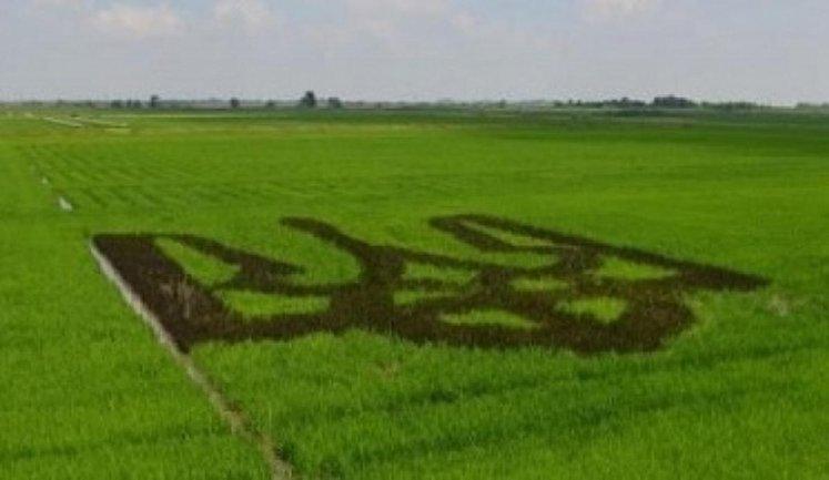 В Украине могут наконец открыть рынок земли - фото 1