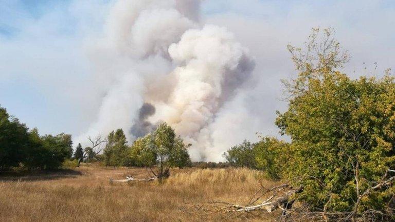 14 гектаров леса горят в Зоне отчуждения - фото 1