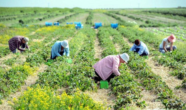 Поляки требуют выпустить украинцев на заработки - фото 1