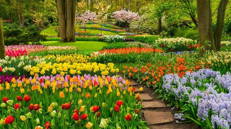 Выращивание тюльпанов: несколько полезных советов - фото 1