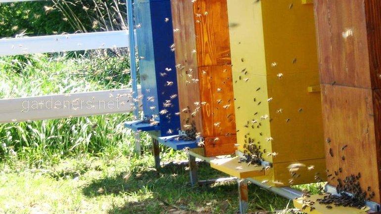 Характеристики и виды популярных уликов для пчел - фото 1